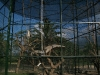 capuchin-monkeys-2